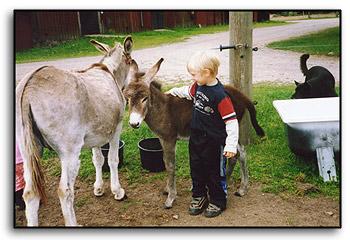 Oscar och åsnorna.
